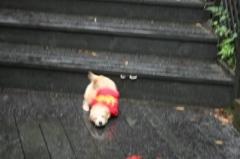 初めて階段上り下りできまちた!