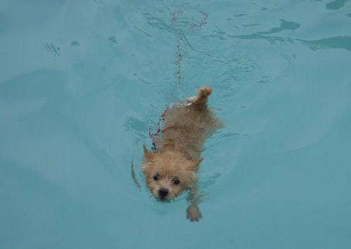 ちぇるの水泳