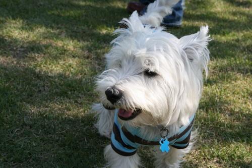 白犬さん.jpg