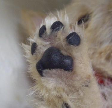 Chelfy's Paw