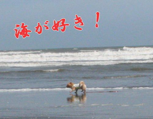 海が好き!