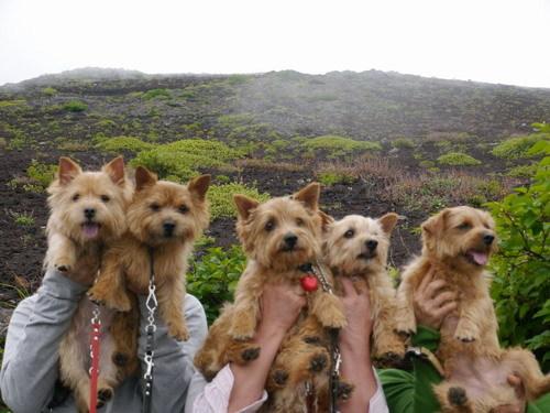 富士山世界遺産.jpg