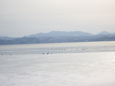 白鳥の飛来する湖.jpg